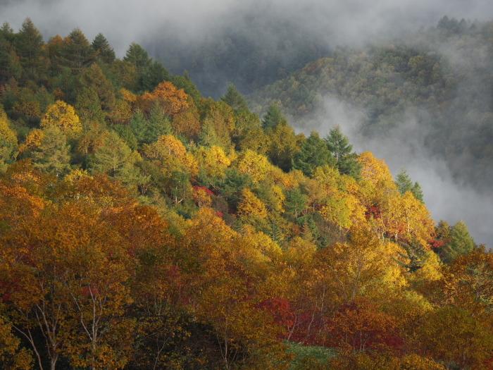 紅葉と雲海_c0110112_21070808.jpg