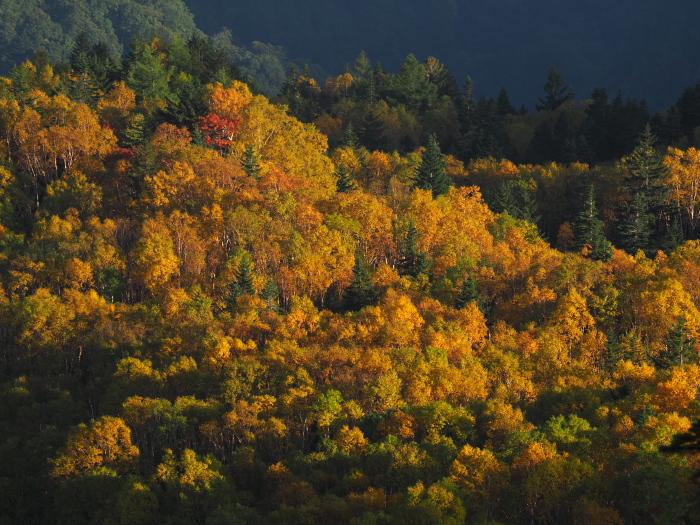 紅葉と雲海_c0110112_21082776.jpg