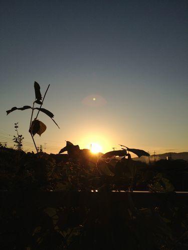 朝陽をつかまえる_c0141013_10251350.jpg