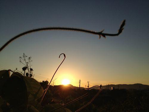 朝陽をつかまえる_c0141013_10252219.jpg
