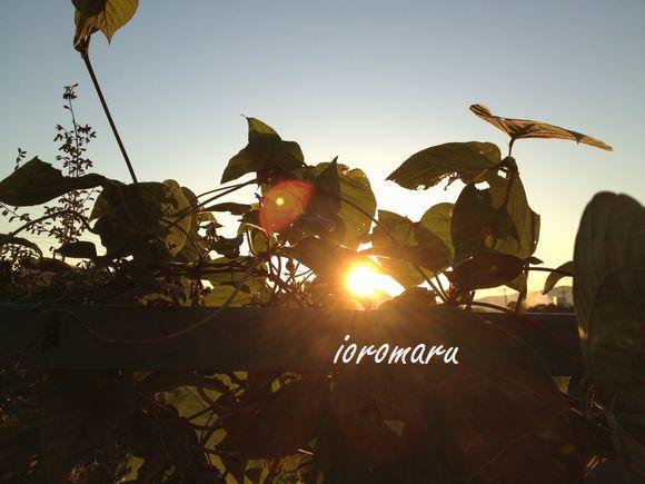 朝陽をつかまえる_c0141013_10253092.jpg