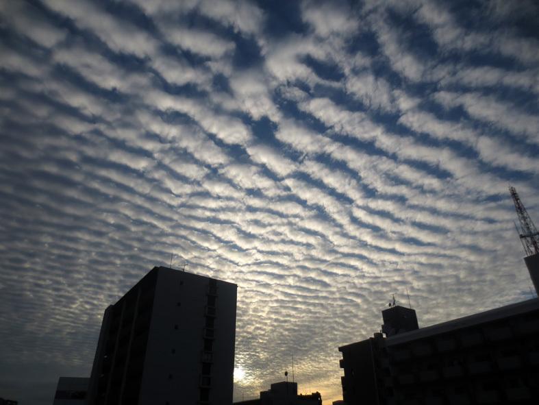 ■鱗雲飛ぶ空_d0190217_17343779.jpg