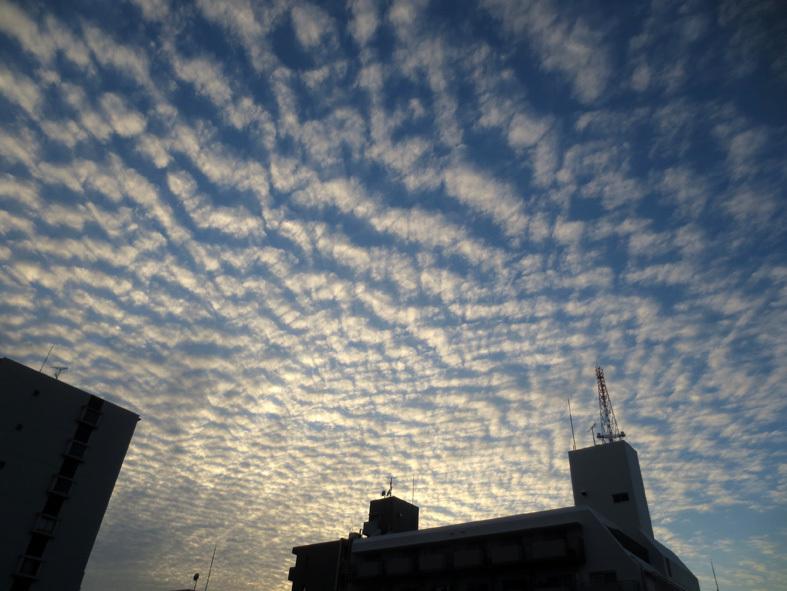 ■鱗雲飛ぶ空_d0190217_17345292.jpg