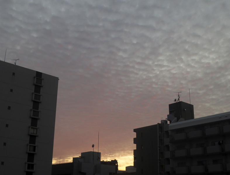 ■鱗雲飛ぶ空_d0190217_17350827.jpg