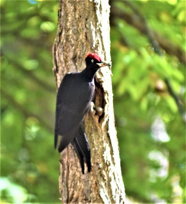 北の森からエゾリスとの鳥便り_d0098721_22184874.jpg