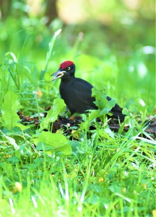 北の森からエゾリスとの鳥便り_d0098721_22190356.jpg