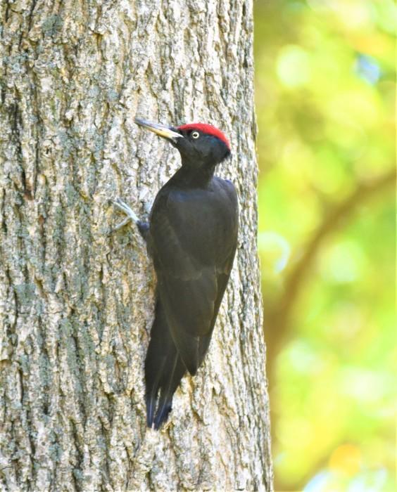 北の森からエゾリスとの鳥便り_d0098721_22191259.jpg