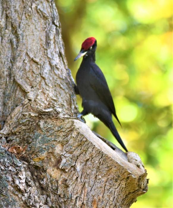北の森からエゾリスとの鳥便り_d0098721_22191665.jpg