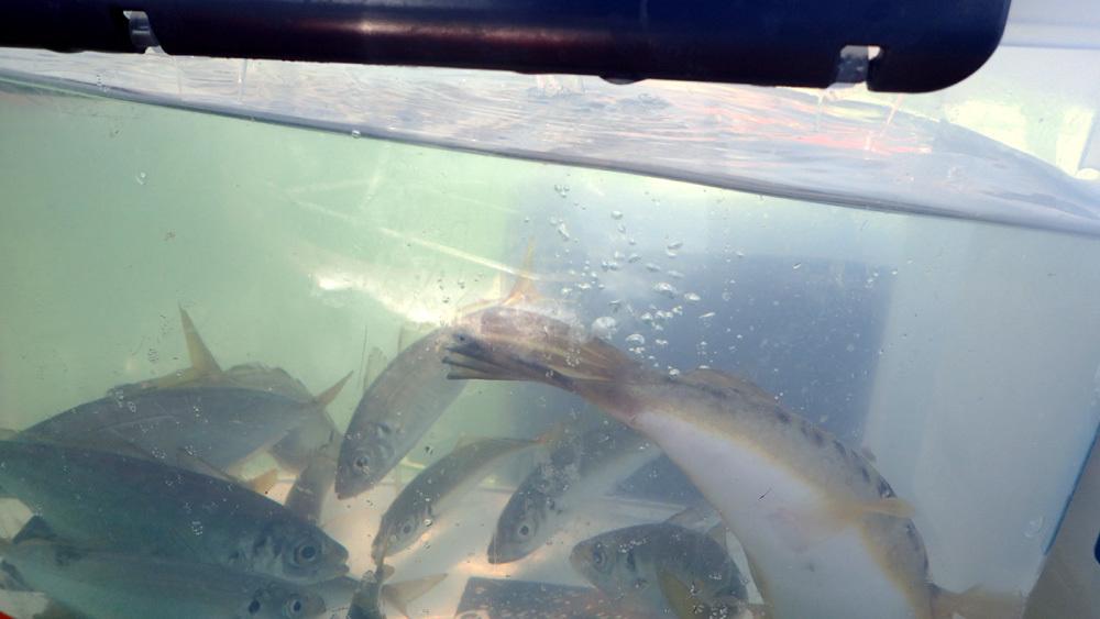 2020年、オーパL3ボート釣り9回目。 2020年10月21日(水)_d0171823_22211168.jpg