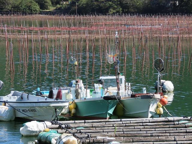 矢口アオサノリ風景(その2)(撮影:10月14日)_e0321325_16304716.jpg