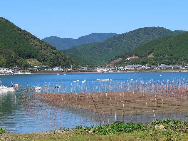 矢口アオサノリ風景(その2)(撮影:10月14日)_e0321325_16315636.jpg
