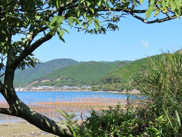 矢口アオサノリ風景(その2)(撮影:10月14日)_e0321325_16321293.jpg