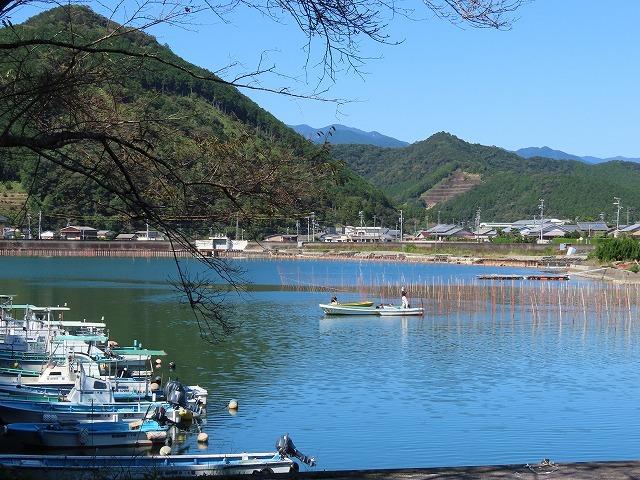 矢口アオサノリ風景(その2)(撮影:10月14日)_e0321325_16322724.jpg