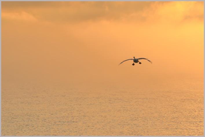 2020年(秋)白鳥6_a0123239_12410812.jpg