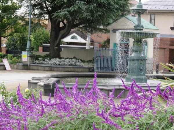 秋の花に誘われて・・横浜山手_e0414858_21514526.jpg