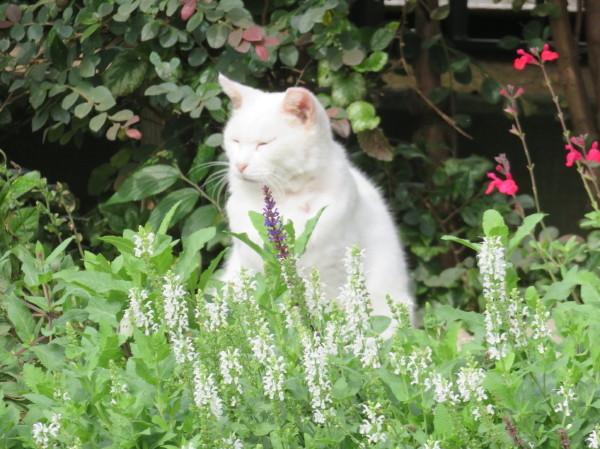 秋の花に誘われて・・横浜山手_e0414858_21522302.jpg