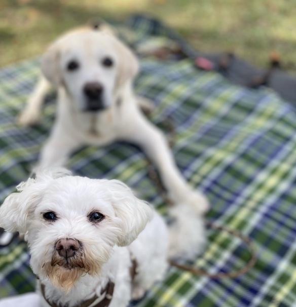Picnic with dogs @JOHOKU park 表情が豊かに♪_a0165160_18115757.jpg