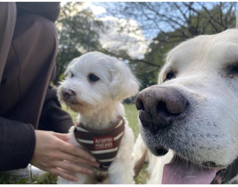 Picnic with dogs @JOHOKU park 表情が豊かに♪_a0165160_18134972.jpg
