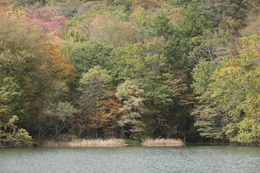 高原に秋の訪れ_e0304170_18175047.jpg