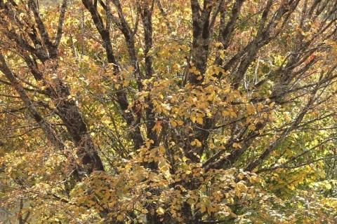高原に秋の訪れ_e0304170_18180895.jpg