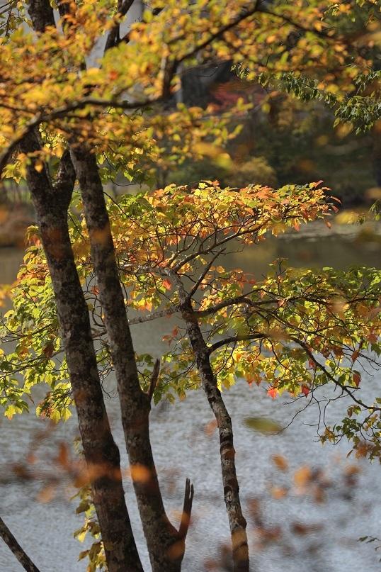 高原に秋の訪れ_e0304170_18181597.jpg