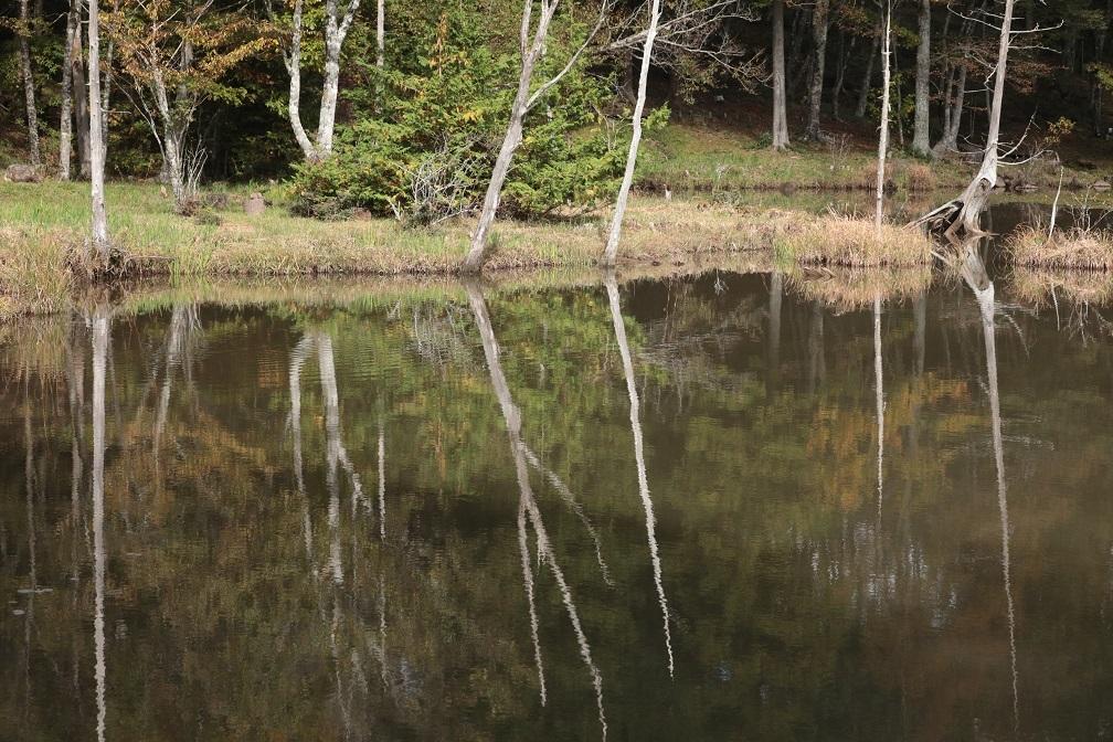 高原に秋の訪れ_e0304170_18182536.jpg