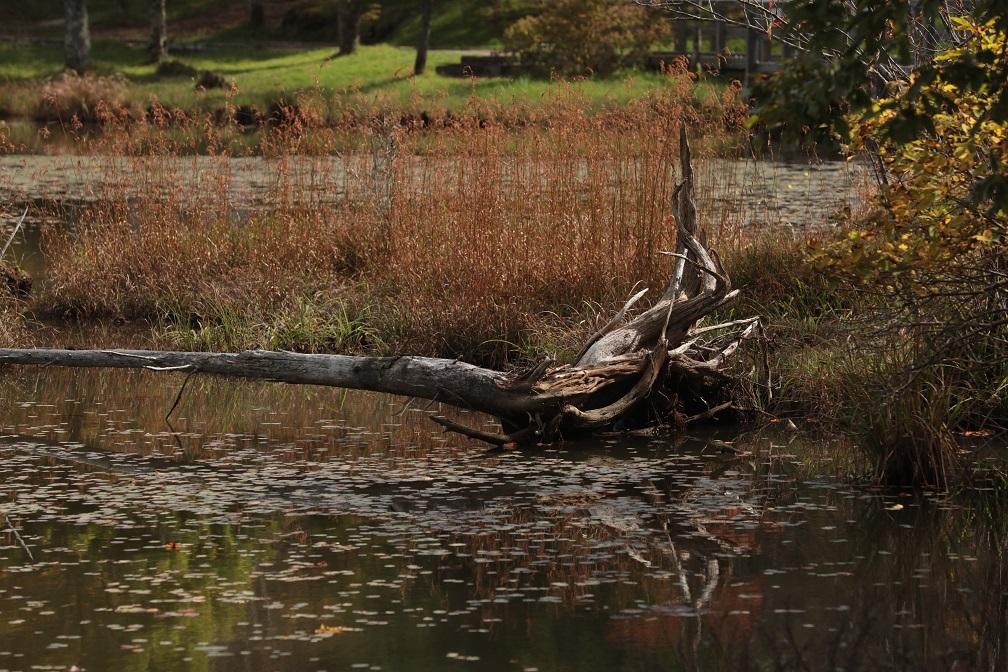 高原に秋の訪れ_e0304170_18184166.jpg