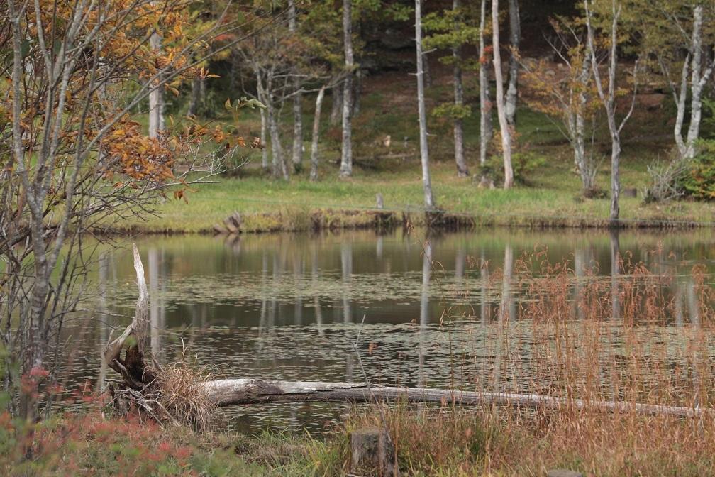 高原に秋の訪れ_e0304170_18185051.jpg