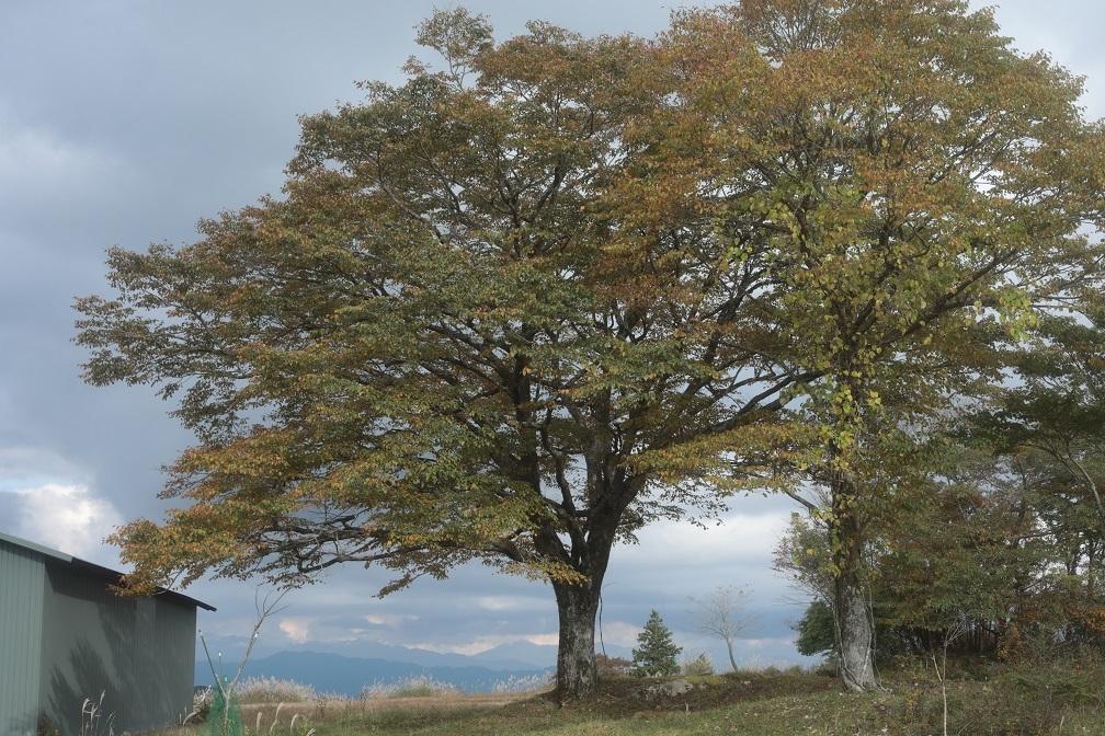 高原に秋の訪れ_e0304170_18191334.jpg