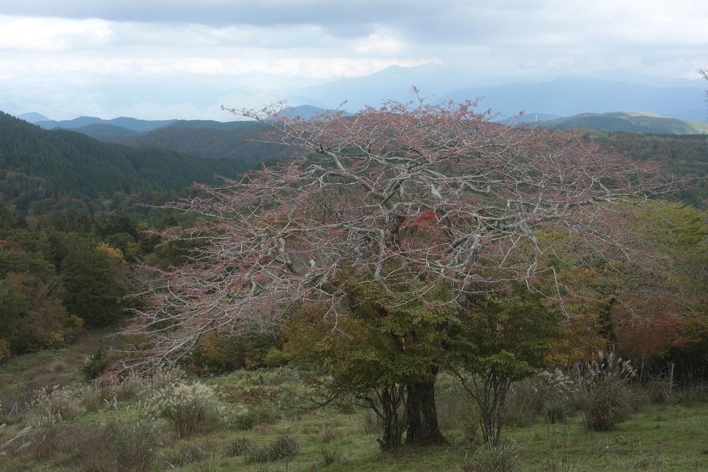 高原に秋の訪れ_e0304170_18191910.jpg