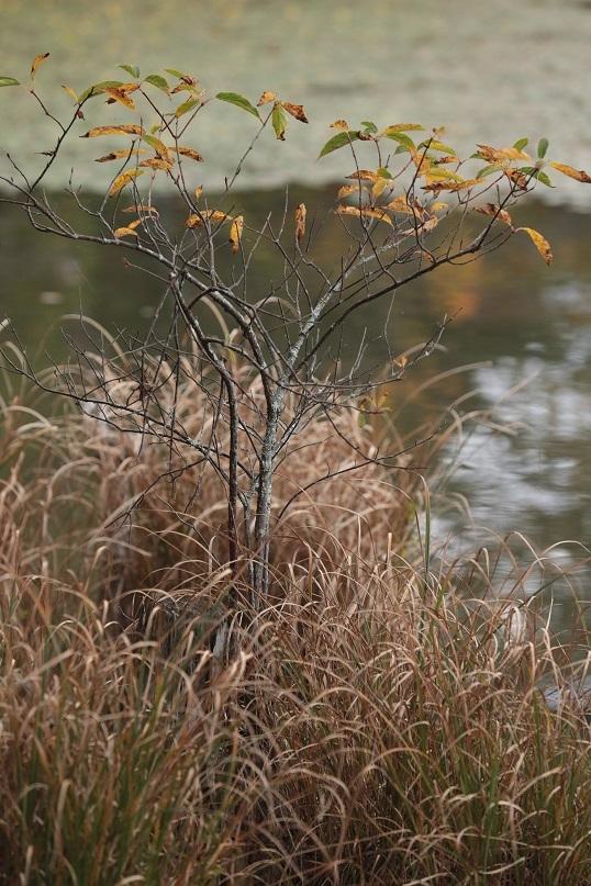 高原に秋の訪れ_e0304170_18192854.jpg