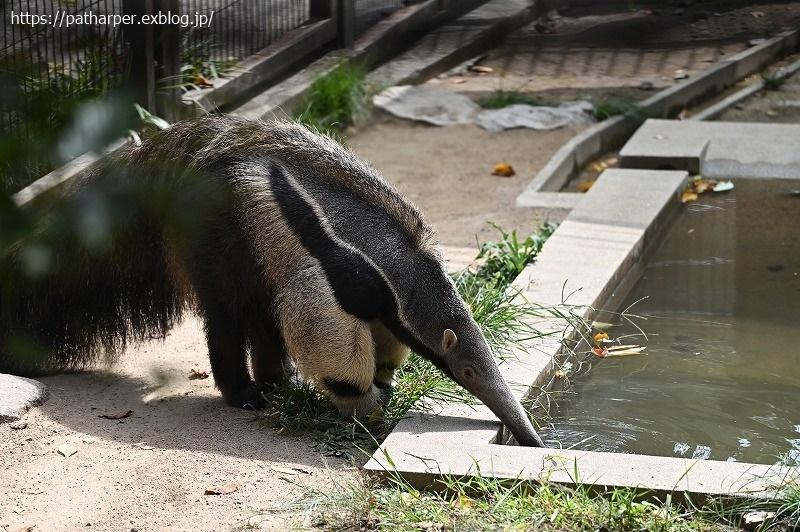 2020年9月 王子動物園4 その2_a0052986_07512750.jpg