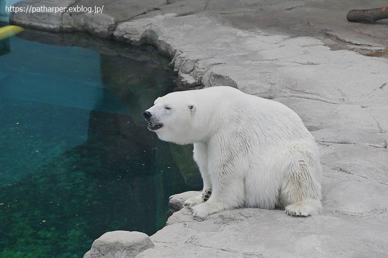2020年9月 王子動物園4 その2_a0052986_07515942.jpg