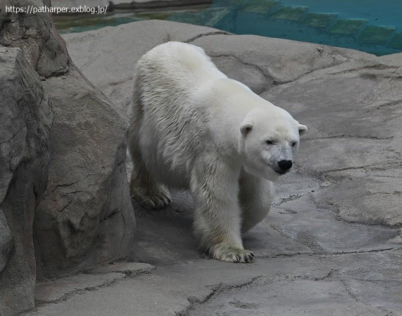 2020年9月 王子動物園4 その2_a0052986_07520321.jpg
