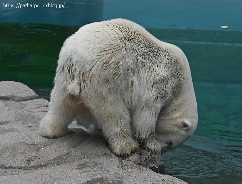 2020年9月 王子動物園4 その2_a0052986_07544989.jpg