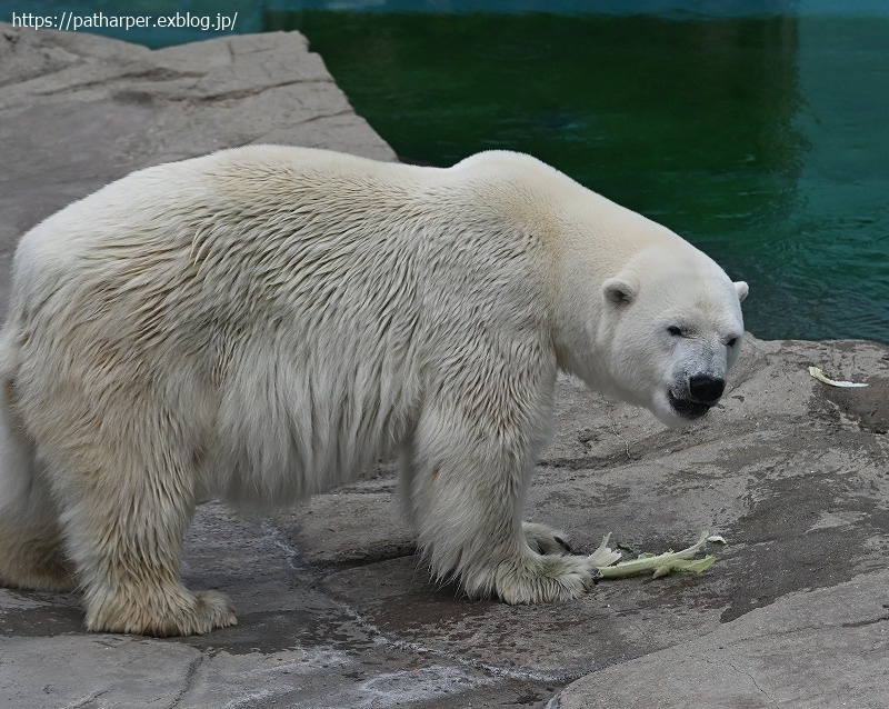 2020年9月 王子動物園4 その2_a0052986_07554113.jpg