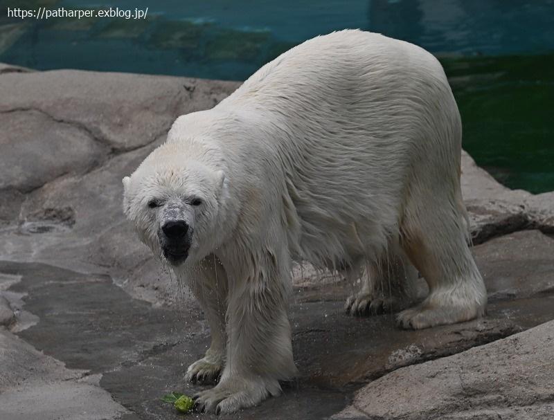 2020年9月 王子動物園4 その2_a0052986_07562365.jpg