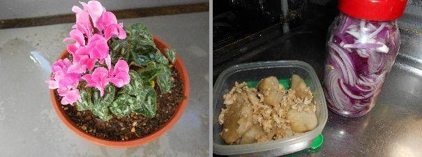 サトイモの煮物と赤タマネギのマリネ(^_-)-☆_b0159896_05254179.jpg