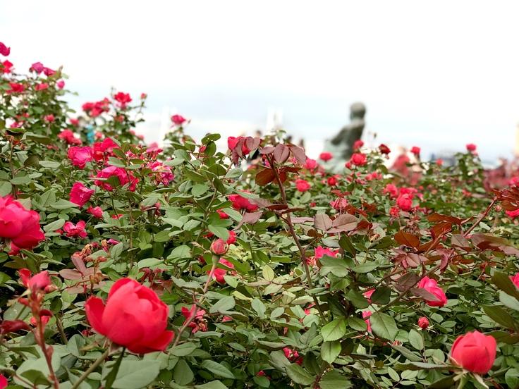 山下公園の赤いバラ_c0212604_7394175.jpg