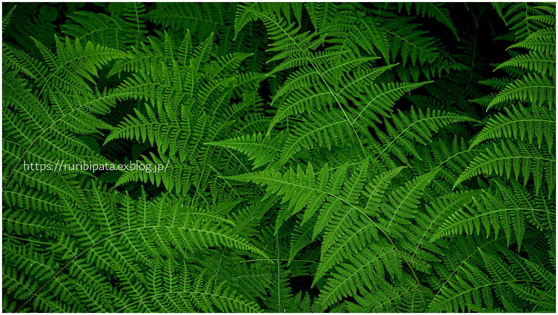 綠のさざ波_f0302613_18423807.jpg