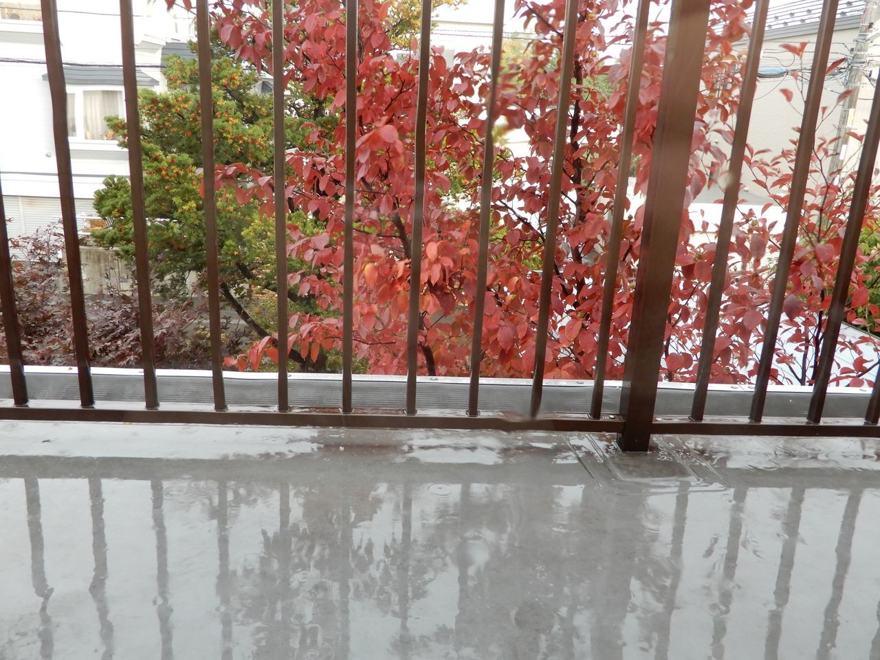 雨のち虹_c0025115_21175449.jpg