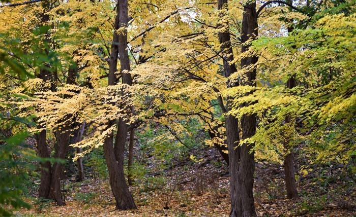 北の森からエゾリス便り_d0098721_19490611.jpg