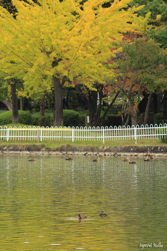 秋に見えてくるもの_d0015026_08505764.jpg