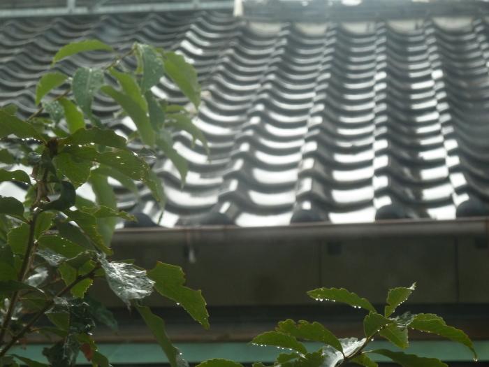 雨!_b0095981_07365106.jpg
