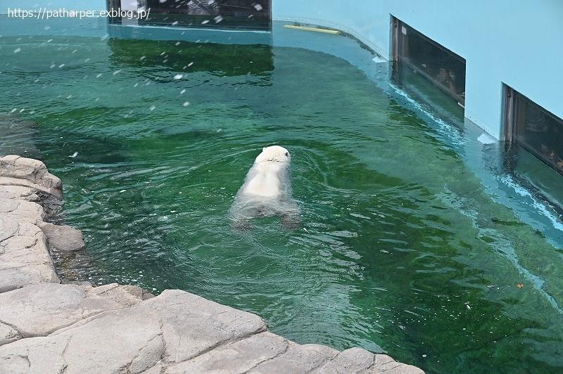 2020年9月 王子動物園4 その3_a0052986_07242420.jpg