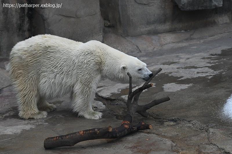 2020年9月 王子動物園4 その3_a0052986_07250135.jpg