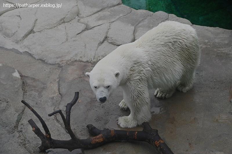 2020年9月 王子動物園4 その3_a0052986_07285827.jpg