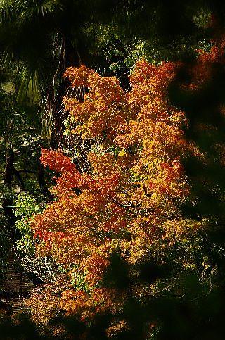 神柱公園の紅葉_f0360801_17475905.jpg