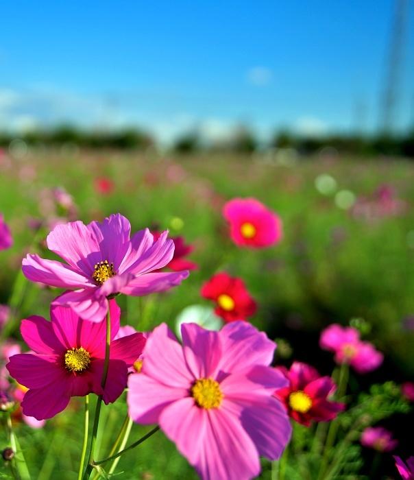 秋らしい日でした。_c0187503_21090097.jpg