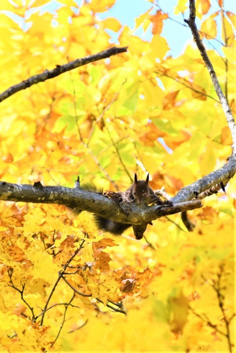 紅葉の北の森からエゾリス便り_d0098721_17132129.jpg
